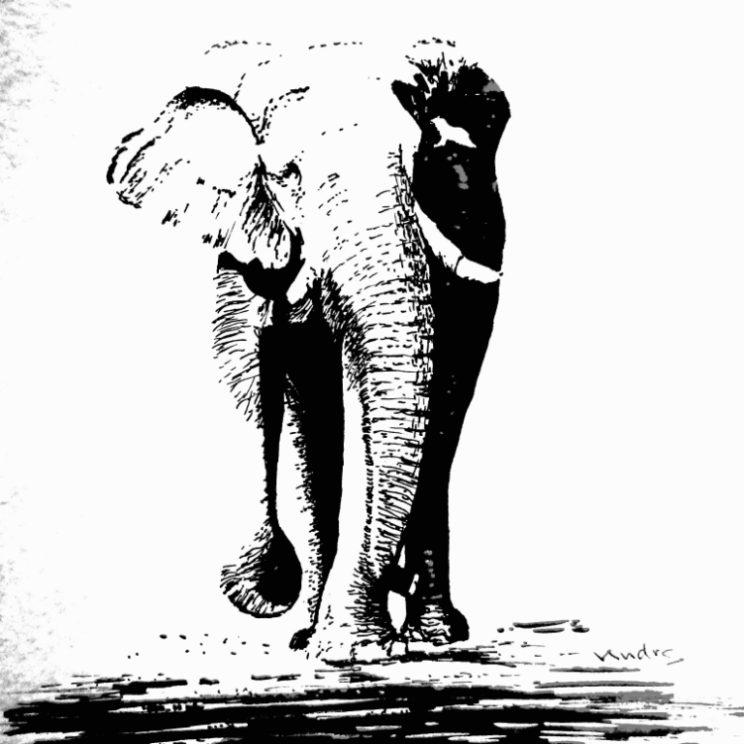 Andrs_Elephant