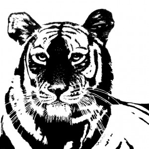 Tiger head2